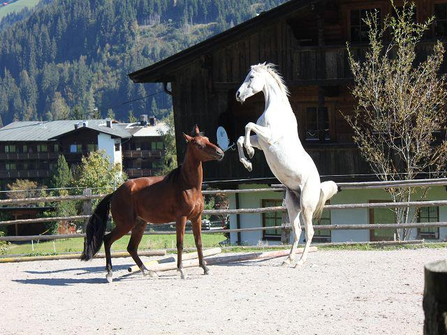 Pferde am Reitplatz