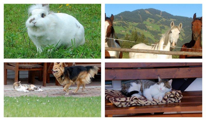 Bilder von unseren Tieren