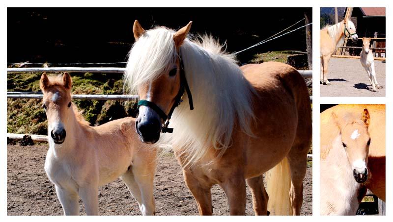 Foto Pferd mit Fohlen